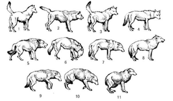 Risultati immagini per dog tail