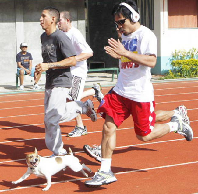 Professional Boxer Manny Pacquiao's Beloved Dog Is His Workout ...