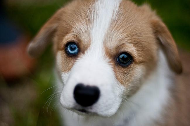 3-Heterochromia-eyes