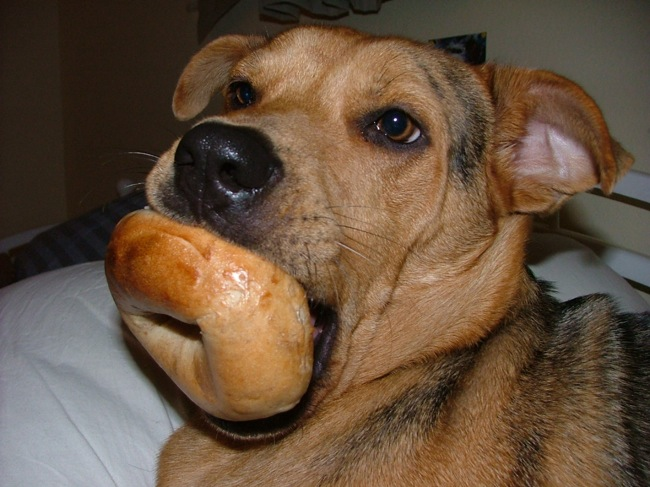 dog-and-bagel
