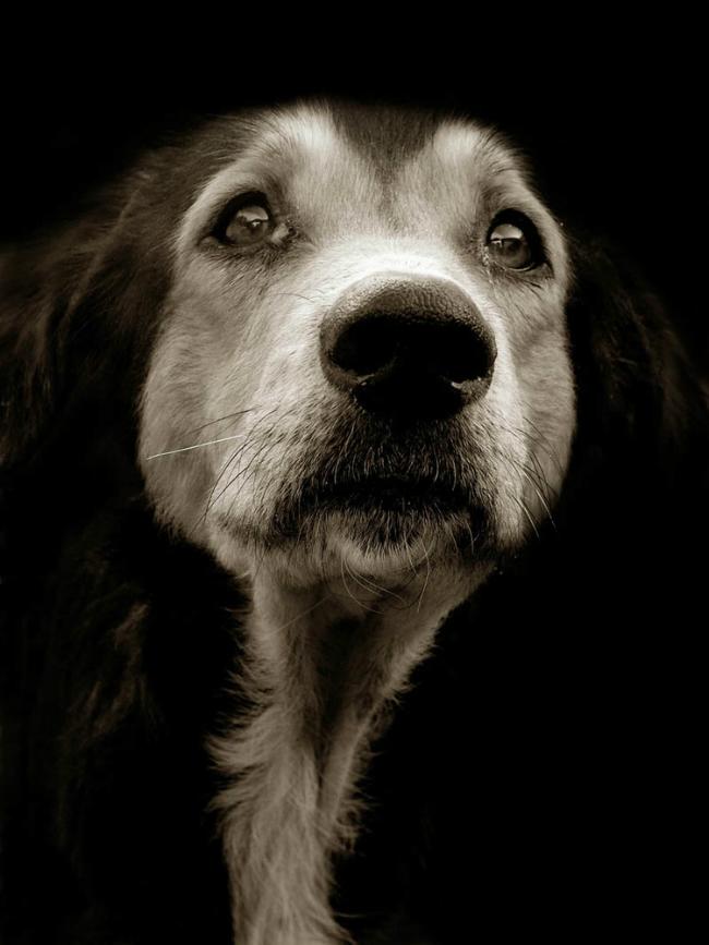 traer-scott-shelter-dog-2