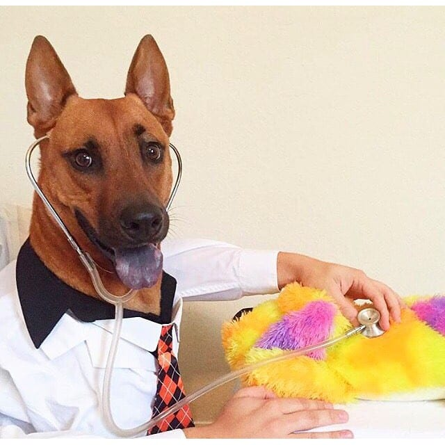 Dogs doctor costume | Petpace