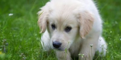 Potty Training for Dogs & Puppies!