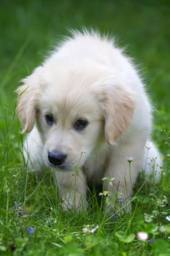 showing you how to potty train a puppy.