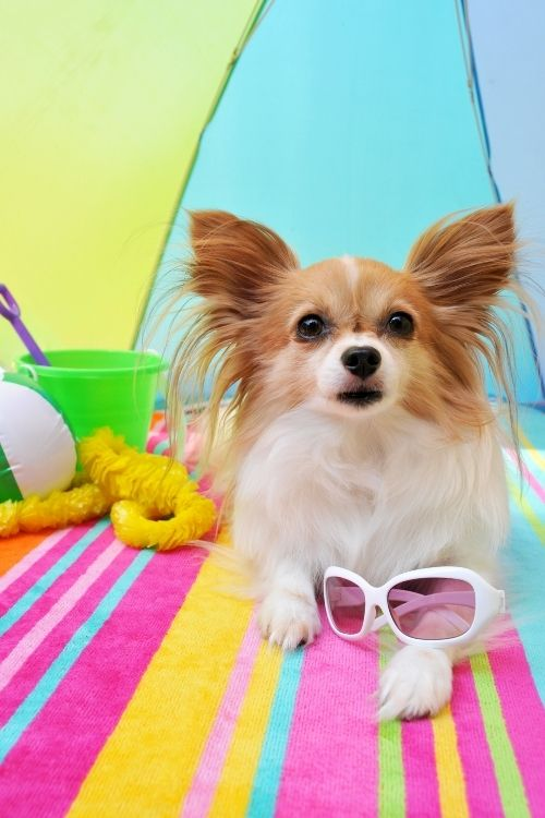 cute dog toys for summer