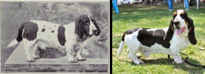 dog evolution, dog breeder, basset hound, hound dogs, dog advice, dog help, dog advice, dog enthusiasts, canine guide, evolution of canines, dog breeds history