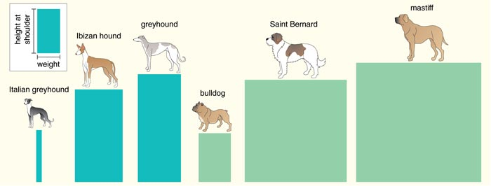 barkthink, dog weight to height ratio, canine proportions, evolution of dog, dog genetics adult weight height, saint bernard evolution, bulldog breed history, dog dna research, canine scientific research, greyhound morphological differences, how did greyhounds evolved to be fast