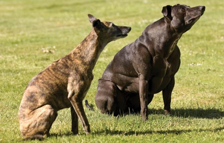 Genetics and the Shape of Dogs - Bark Think