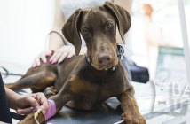 Long-Term Health Risks and Benefits Associated with Spay / Neuter in Dogs