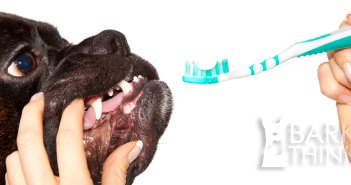 Dental Health for Dogs: A Guide to Cleaning Your Dog's Teeth and Dog Toys/Treats with Oral Health Teeth Cleaning Benefits