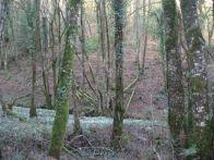 Snowdrop Valley 2