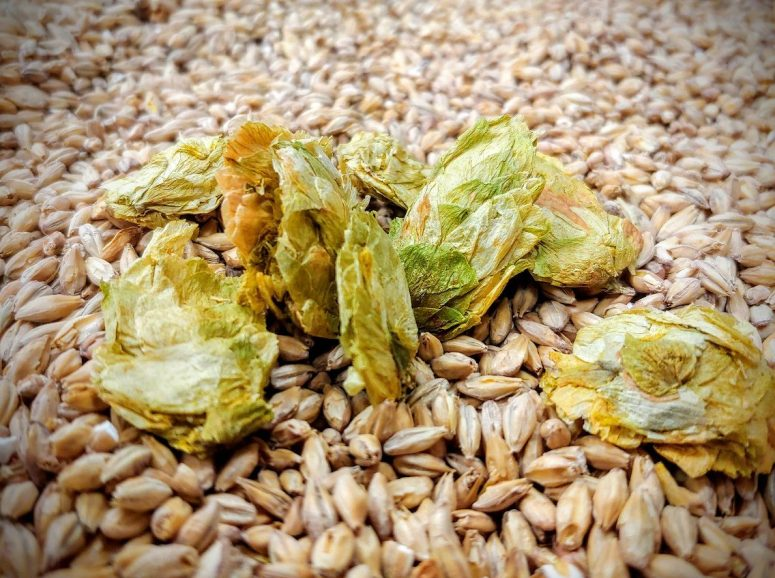 Hops and Grain at Barley's