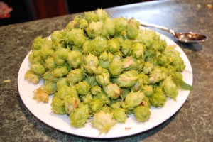 1st Hop Harvest Nugget 7-09 - 4oz of Goodness