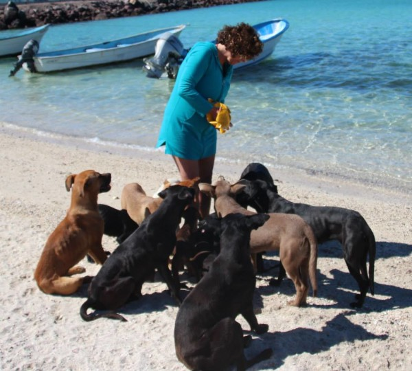 American couple holidaying in Mexico look after help 34 Homeless cats dogs.2