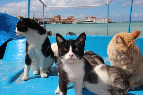 American couple holidaying in Mexico look after help 34 Homeless cats dogs.8