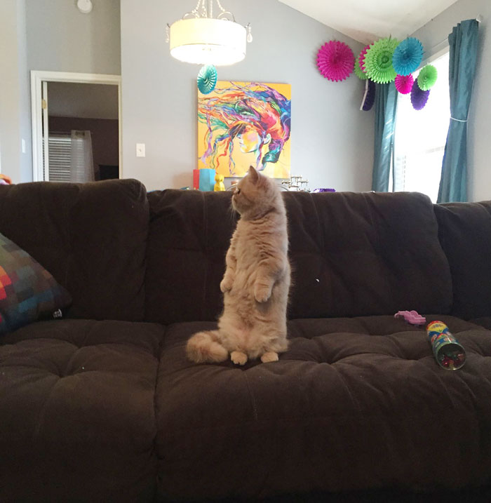 george-the-cat-standing-on-2-legs-4
