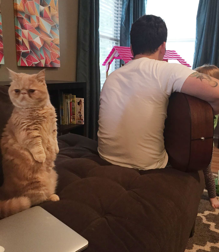george-the-cat-standing-on-2-legs-5
