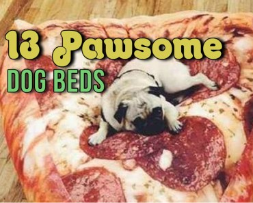 cool dog beds