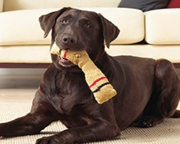 easy do it yourself crafts for dogs