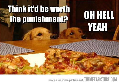 dogs and pizza 8