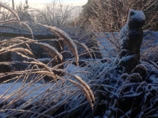 Pussy Cat snow winter