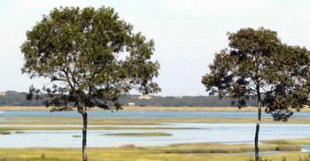 barnstable-great-marsh-wildlife-sanctuary