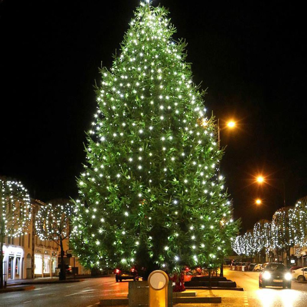 town-centre-christmas-trees-northern-ireland
