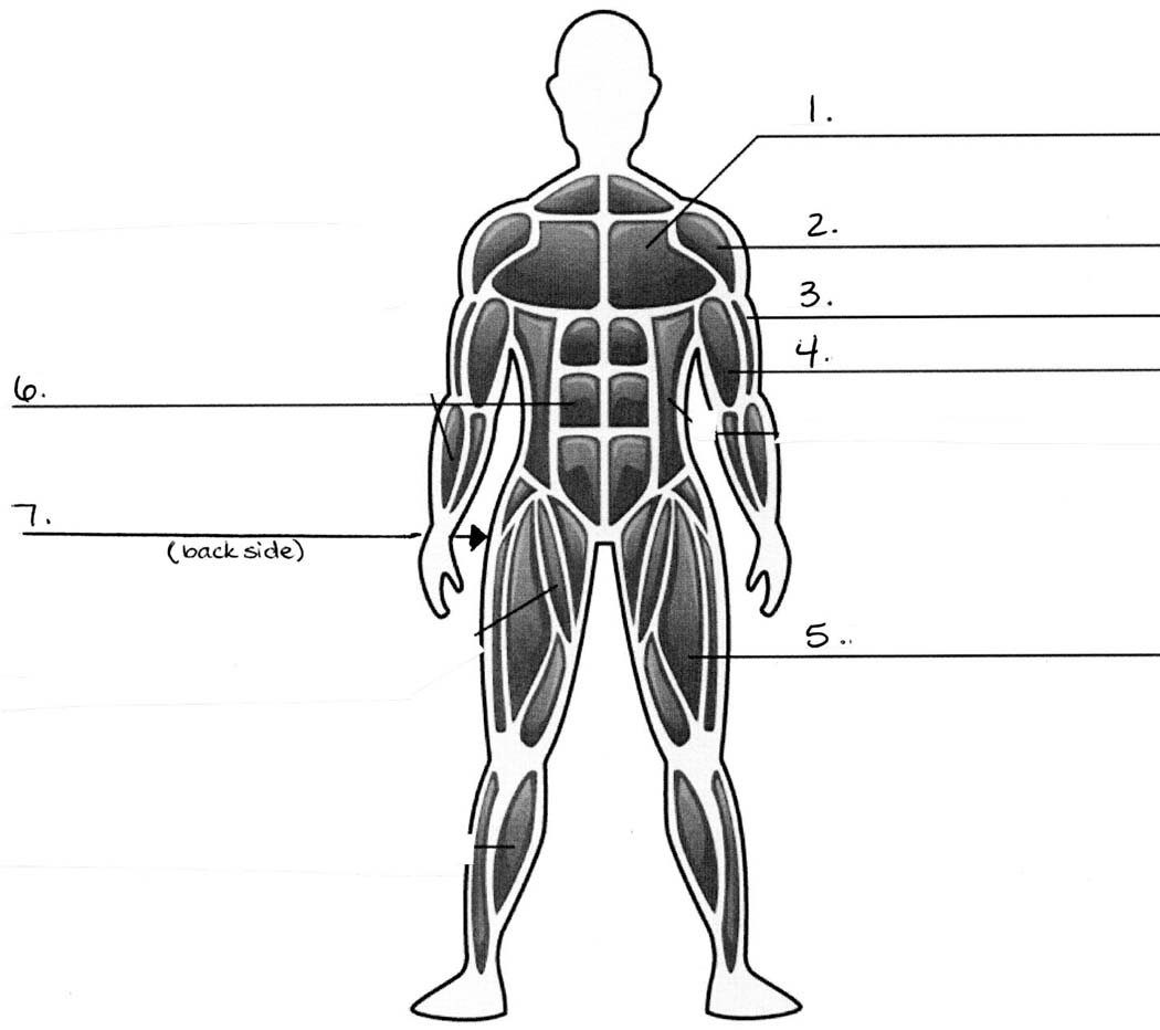 Blank Nervous System Diagram