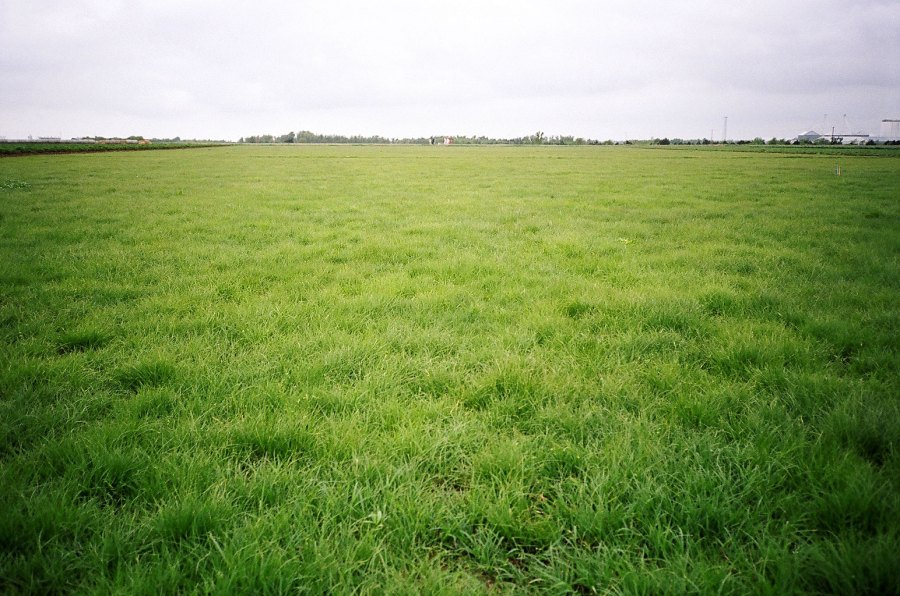 Grass Herbicides