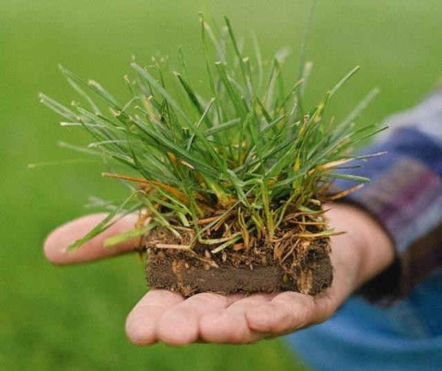 Hand holding a sod of grass