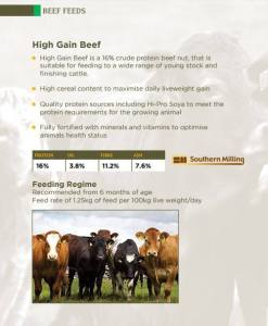 Beef Feed infographic