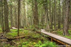 The accessible Trail of the Cedars in Glacier National Park
