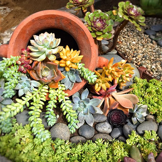 Urban Bloom Succulents as gifts