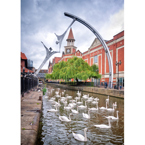 Swans on the River Witham at Lincoln
