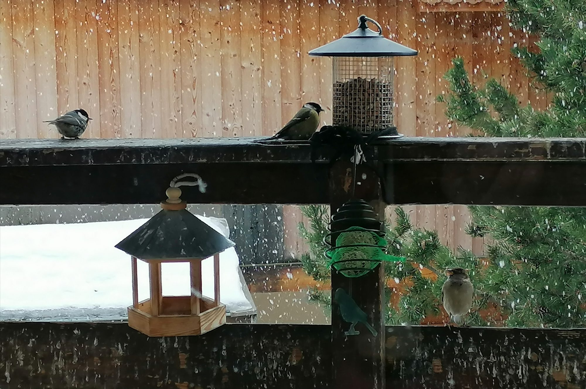 Birds aplenty on the balcony daily