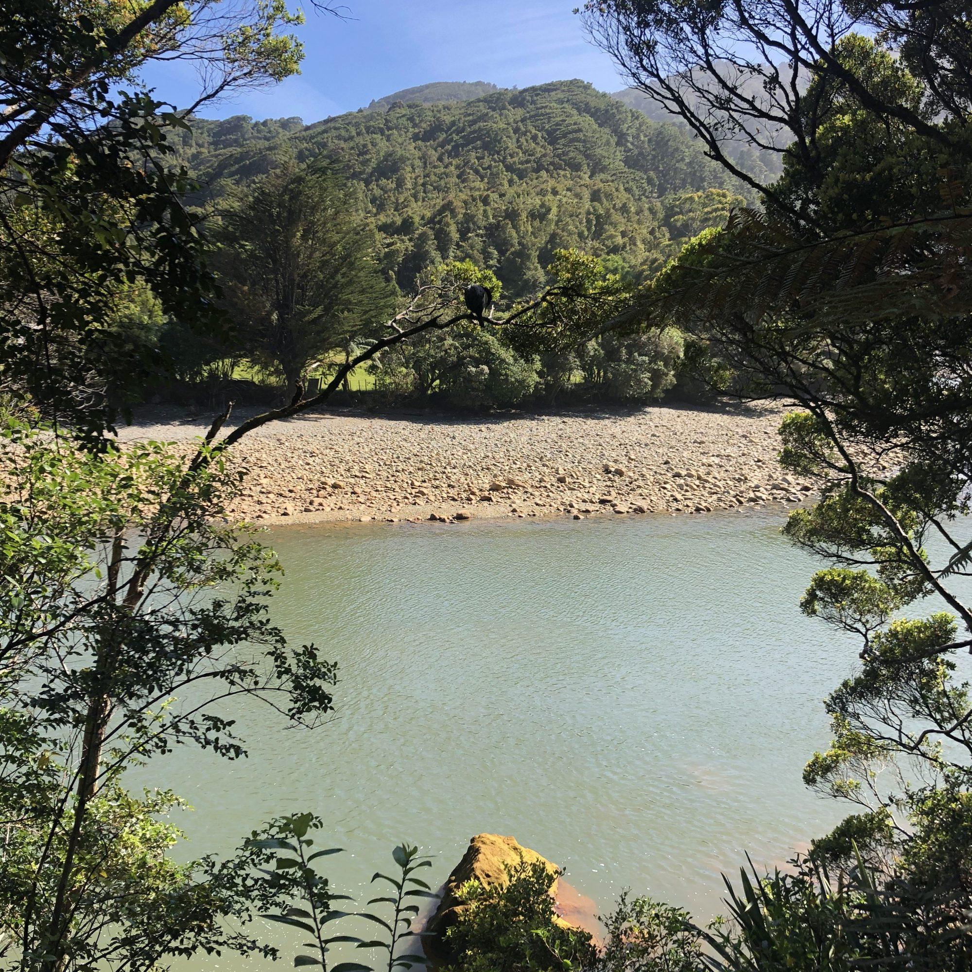 Charming Creek Walkway NZ February 2021