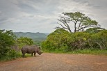 A Rhino stands at the crossroads with a magnificent sky and landscape in the background