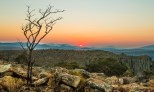 Blyde River Canyon Sunset with dead Tree Silhouette
