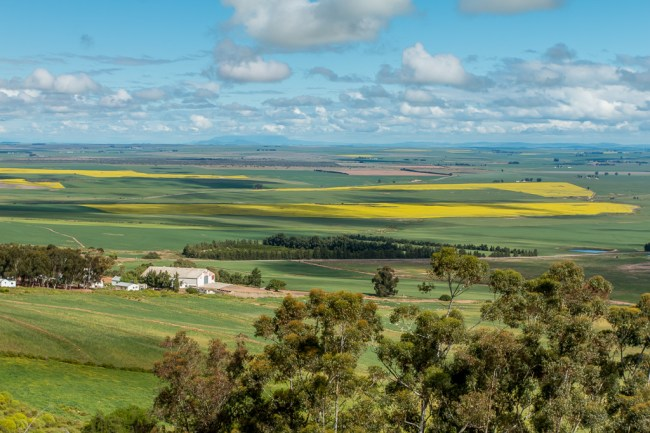 Blue sky and white clouds above a green landscape dotted with golden Canola fields