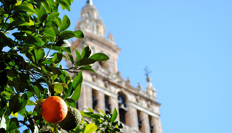 sevilla en 2017 naranjos