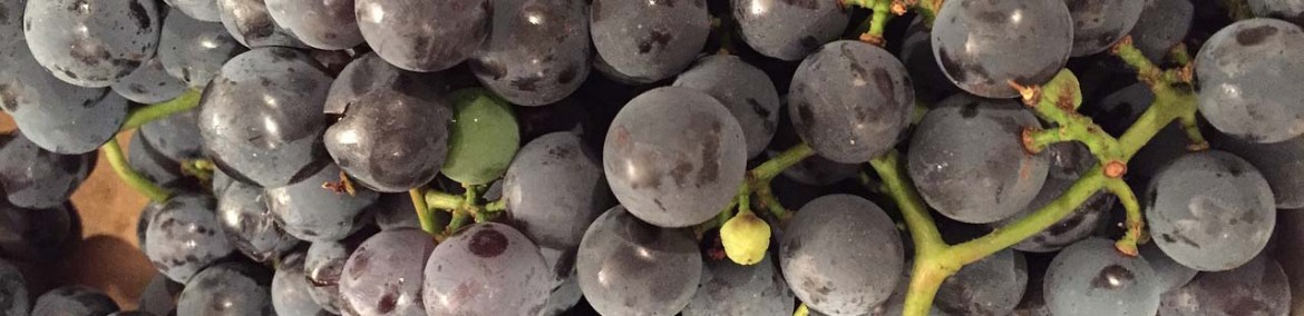 grow grapevines from seeds