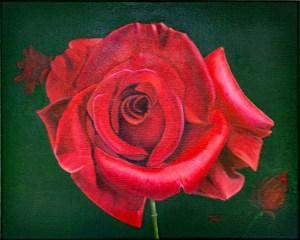 Passionate Rose New Pic DSC_7671