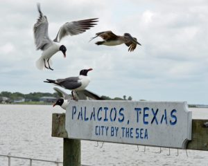 City by the Sea Sign 2