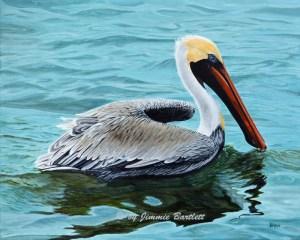 Palacios Bay Pelican