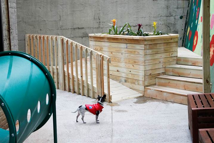 First dog park in a domestic violence shelter opens in NYC