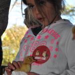 פינות ליטוף בצפון - ברווזים בכפר
