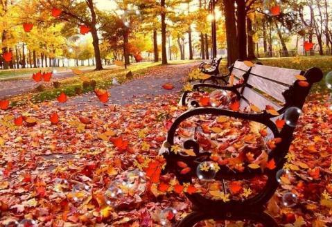 reportase musim gugur autumn