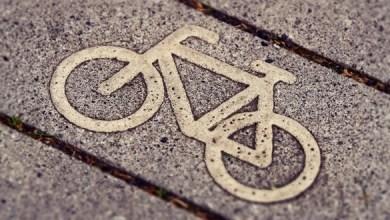 Photo of Для Куршской косы спроектируют 56-километровую велосипедную дорожку