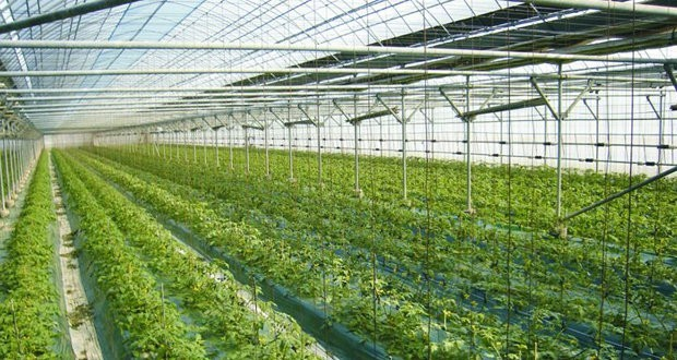 Basalt wool to replace soil in fifth-generation greenhouse complex near Lipetsk