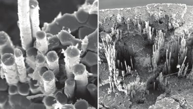 Photo of Mechanical behavior of polysiloxane matrix — based composite reinforced with basalt fibres at elevated temperatures